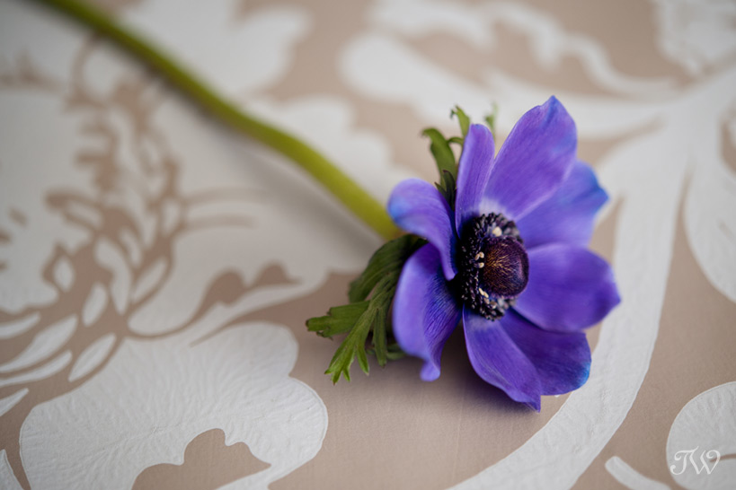 purple anemone for a spring wedding Tara Whittaker Photography