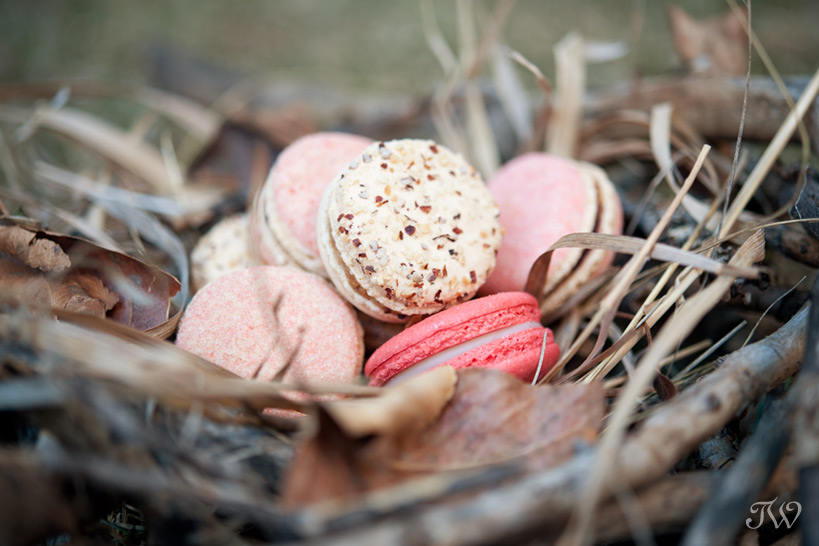 nest of macarons from Yann Haute Patisserie captured by Tara Whittaker Photography