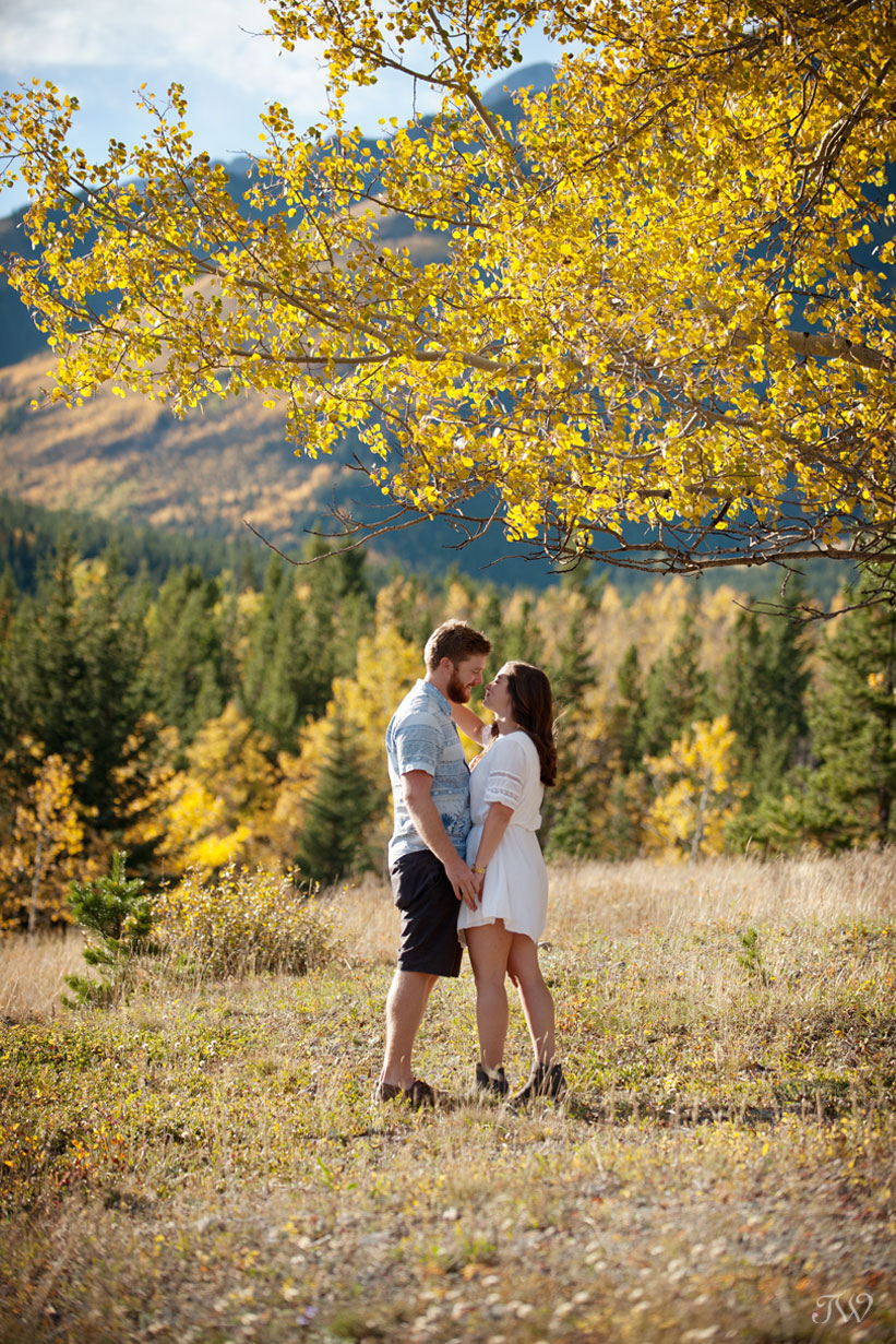 Couple under a tree with yellow leaves for their fall engagement session