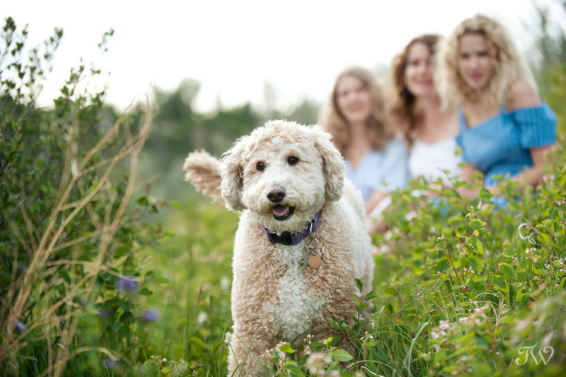 Family dog Fia during family photos at Sandy Beach captured by Tara Whittaker Photography
